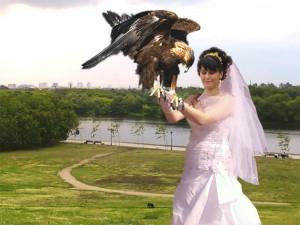 запуск птицы